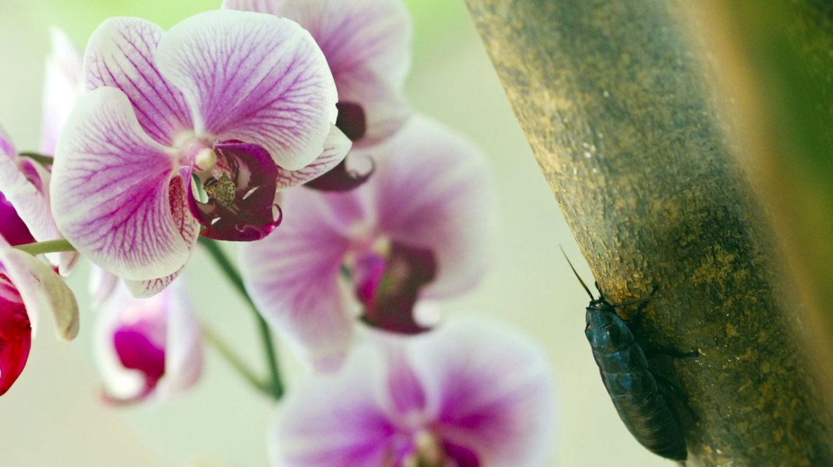 Gândaci, 6 pași pentru a scăpa de insecte în gazon și grădină